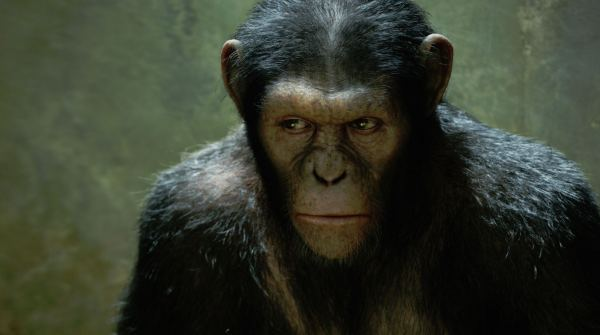 rise-of-the-planet-of-the-apes_still11