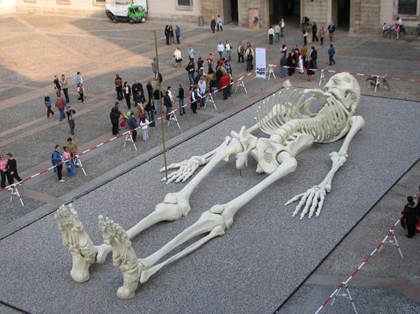 lange menschliche Skel...