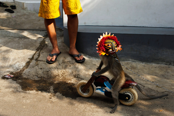 The Art of the Masked Monkey: masked_monkeys_11_20110613_1363615241.jpg