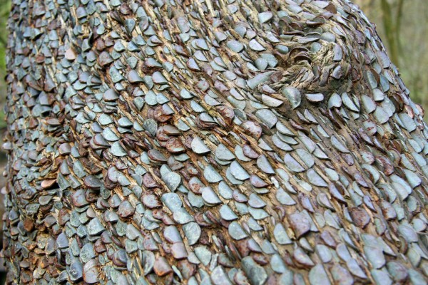 Money Does Sort of Grow on Trees: money_tree_10_20110920_1219231725.jpg