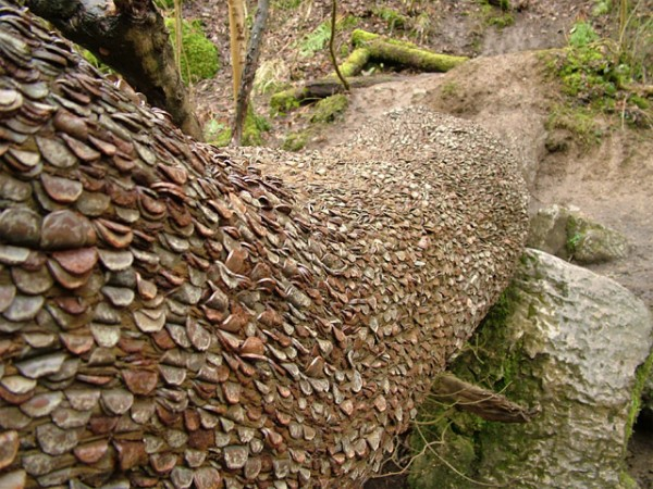 Money Does Sort of Grow on Trees: money_tree_13_20110920_1574685552.jpg