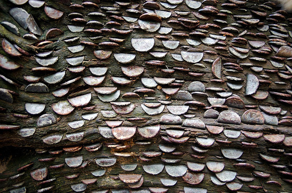 Money Does Sort of Grow on Trees: money_tree_5_20110920_1610406639.jpg