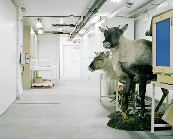 Klaus Pichler: Taxidermy Behind the Scenes: klaus_pichler_20_20111203_1535739143.jpg