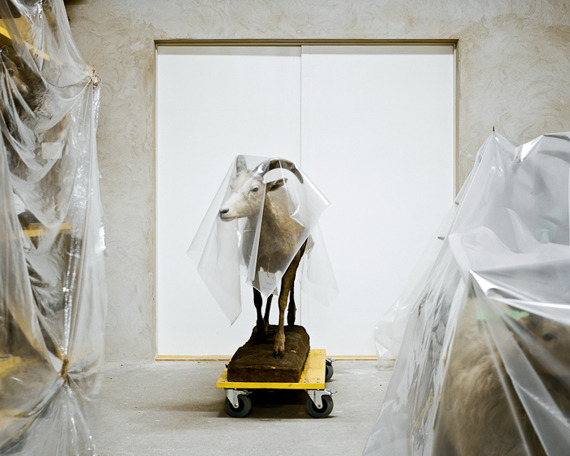 Klaus Pichler: Taxidermy Behind the Scenes: klaus_pichler_4_20111203_1570980403.jpg
