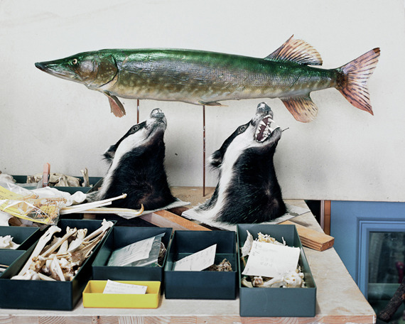 Klaus Pichler: Taxidermy Behind the Scenes: klaus_pichler_7_20111203_1768974681.jpg