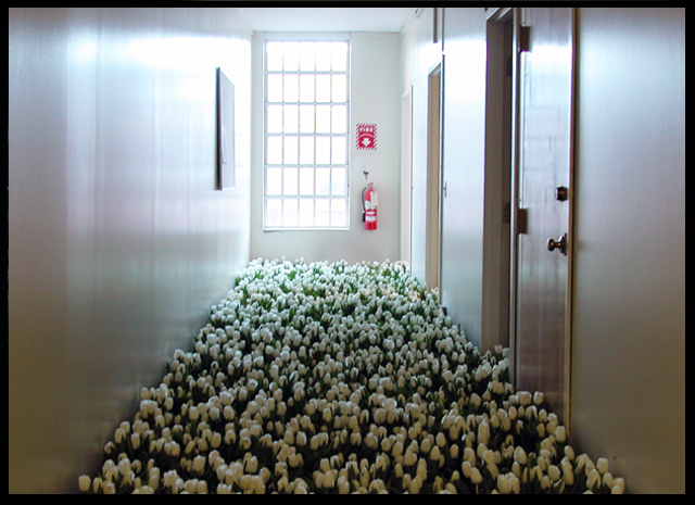 28,000 Flowers @ Massachusetts Mental Health Center by Anna Schuleit, circa 2003: anna_schuleit_12_20120313_1460021027.jpg