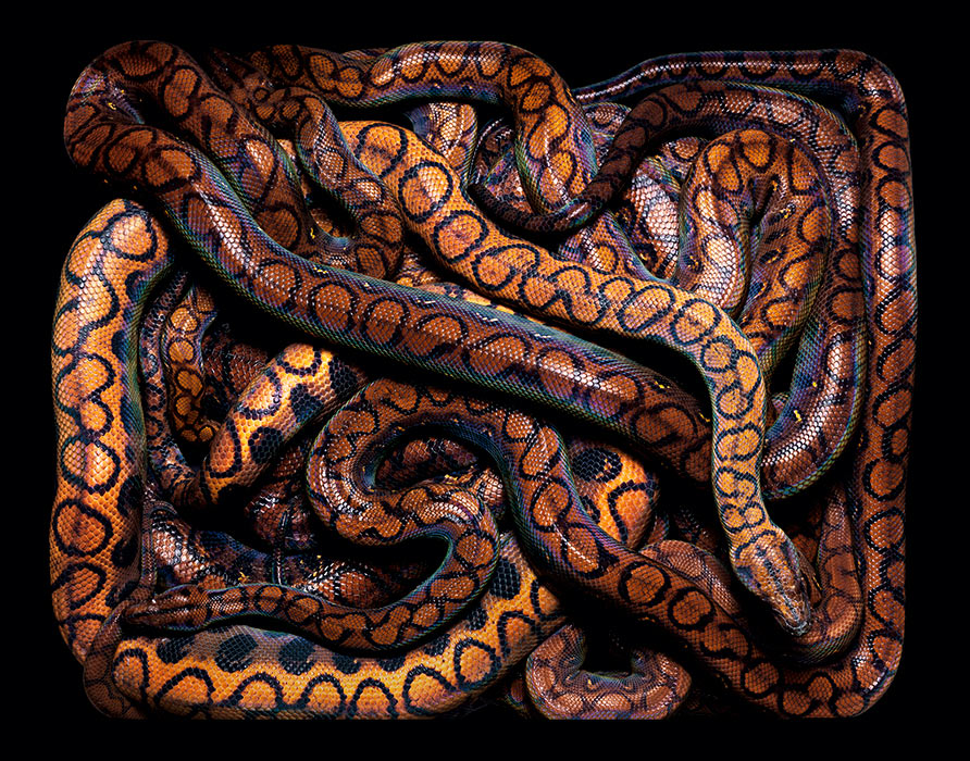 Big Beds of Colorful Snakes: s1.jpg