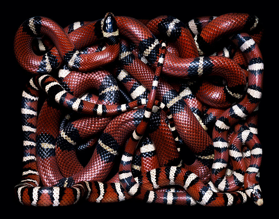 Big Beds of Colorful Snakes: s2.jpg