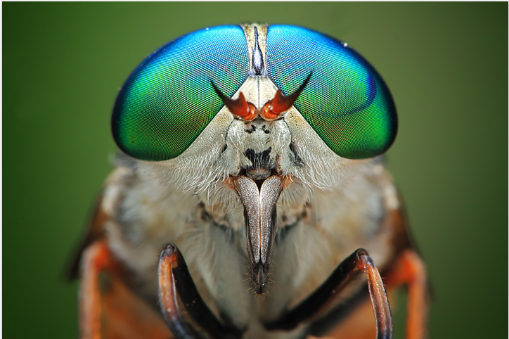 INSECTS In Your Face: Photography by Shikhei Goh: shikhei_goh_14_20120603_2016165654.png