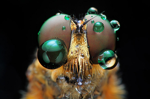 INSECTS In Your Face: Photography by Shikhei Goh: shikhei_goh_1_20120603_1086199658.jpg