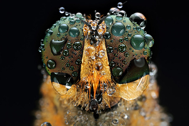 INSECTS In Your Face: Photography by Shikhei Goh: shikhei_goh_4_20120603_1676112276.jpg