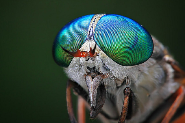 INSECTS In Your Face: Photography by Shikhei Goh: shikhei_goh_7_20120603_1804175438.jpg
