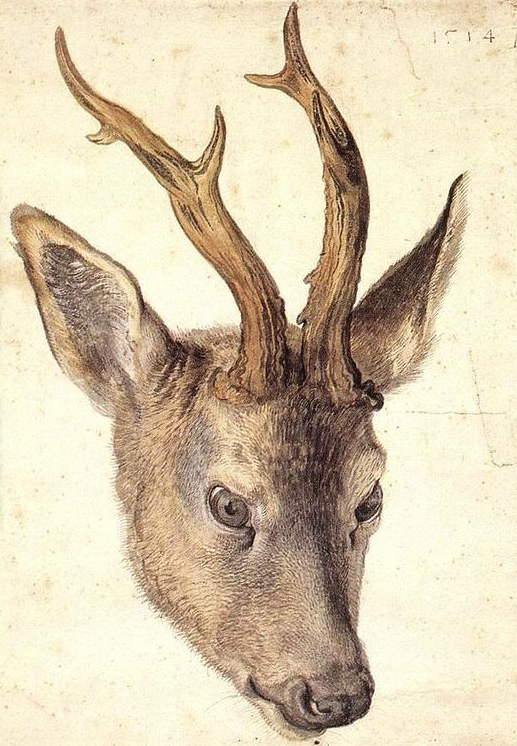 Past Masters: The Work of Albrecht Durer: albrecht-durer_14_20120604_1001130756.png