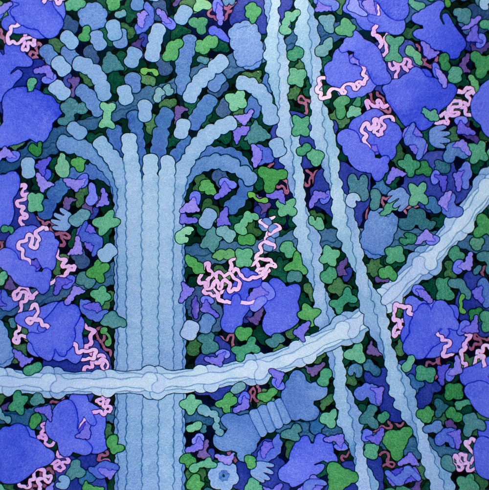 David S. Goodsell's Biomolecular Art: _david_goodsell__1_20120806_1418919312.jpeg