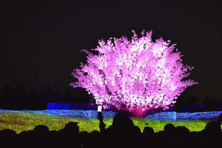 Winter Illuminations: Light Festival in Japan: nabana_no_sato_2_20121104_2040597752.png