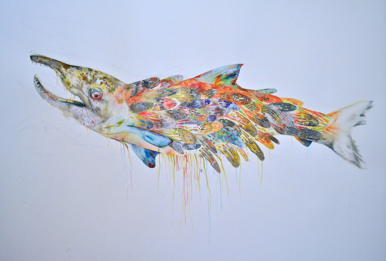 Illustrations and Paintings by Megan Diddie: fish1.jpg