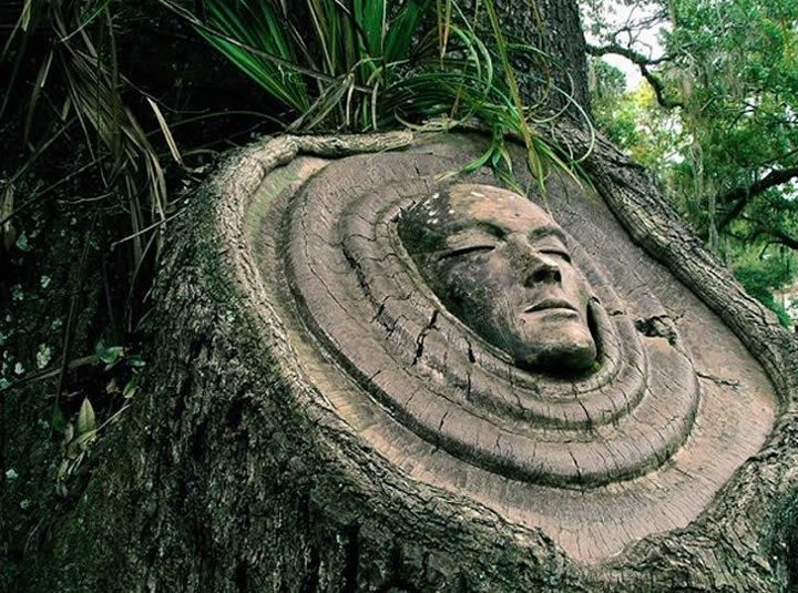 Living Tree Spirit Carvings by Keith Jennings: keith-jennings-spirit-trees.jpeg