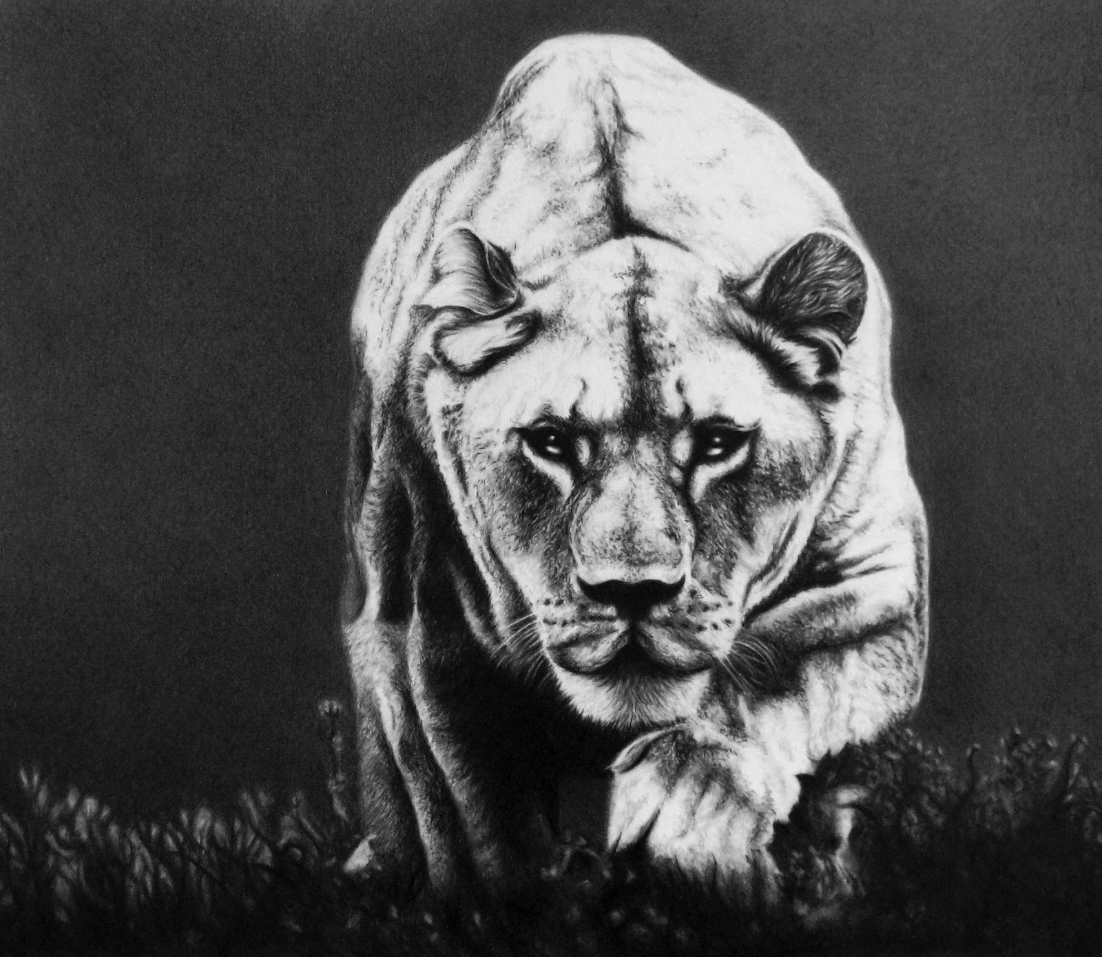 Pencil Illustrations by Gavin O'Donnell : Lioness-Finished-stronger-bg1.jpg
