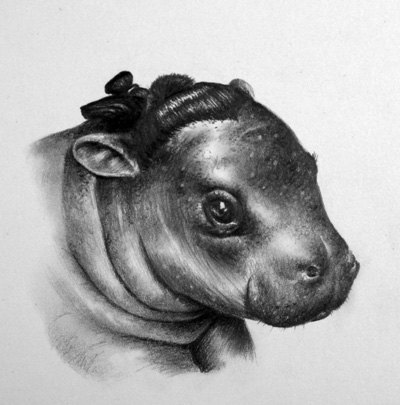 Graphite Realism by Ileana Hunter: il_570xN.327613417.jpg