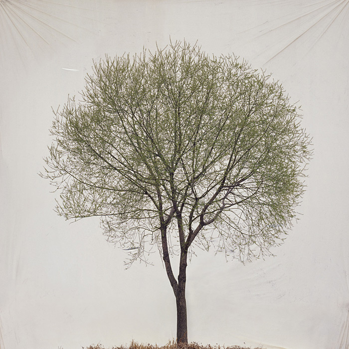 Photographs by Myoung Ho Lee: large-mhl-08.jpg