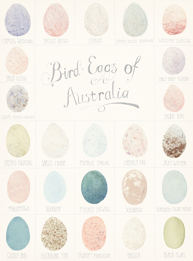 Amy Borrell's Illustrated Taxonomies: amy_borrell_bird_eggs1.jpg