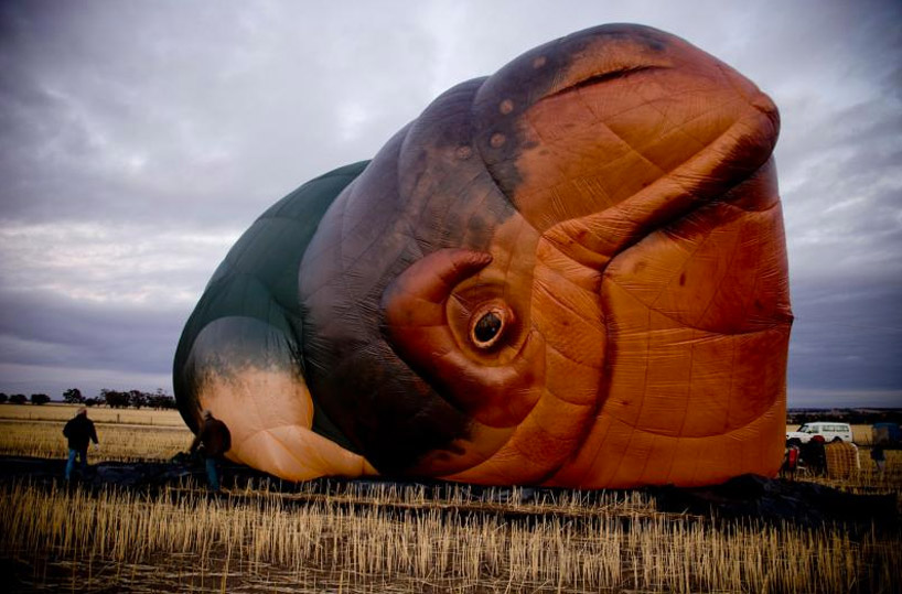"""The Skywhale"" Hot Air Balloon by Patricia Piccinini: designboom-skywhale-patricia-piccinini08.jpg"