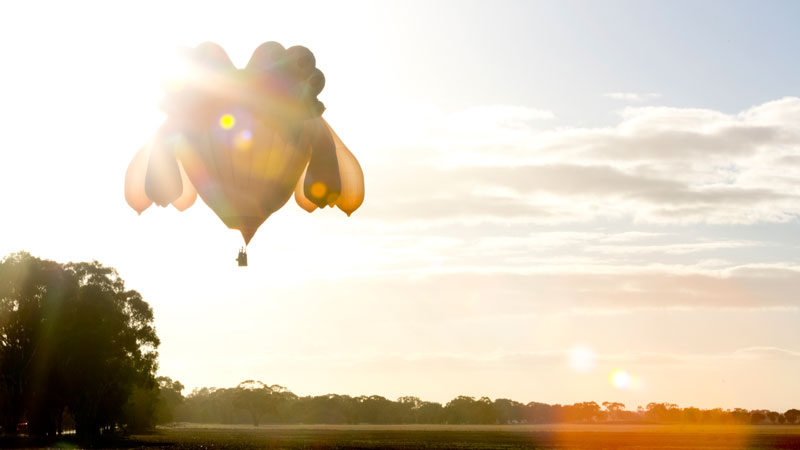 """The Skywhale"" Hot Air Balloon by Patricia Piccinini: flight04.jpg"