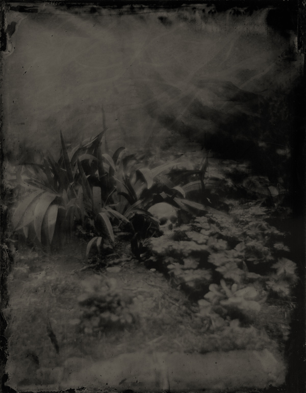 The Demons Return: Wet Plate Collodion Photography by Boogie: skull.jpg