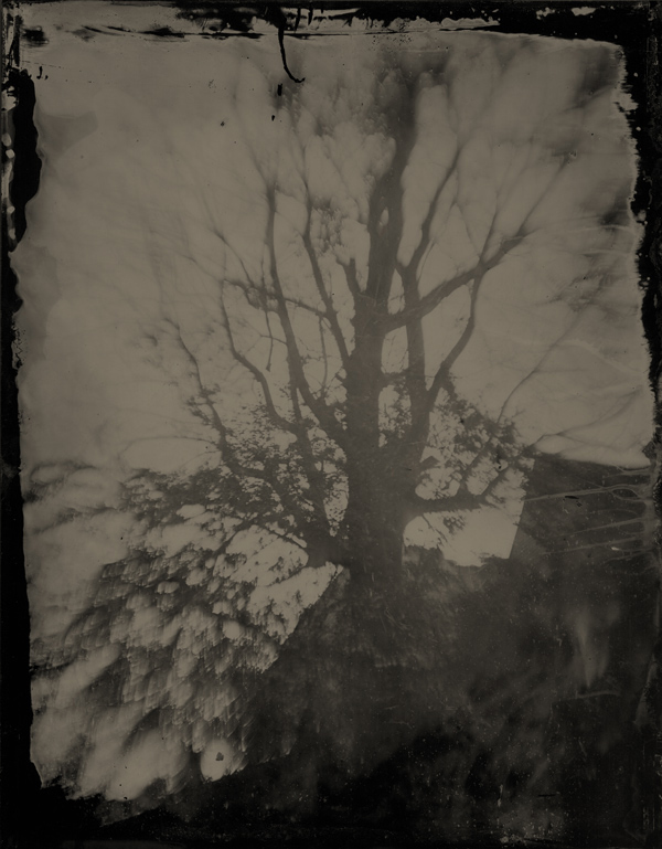 The Demons Return: Wet Plate Collodion Photography by Boogie: tree.jpg