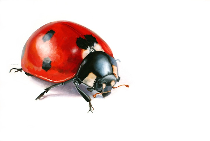 "Suzanne Berry's ""Bug"" Series: SuzanneBerry2.jpg"
