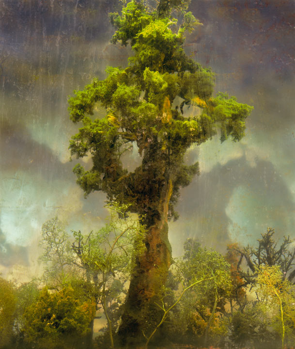Best of 2013: Kim Keever's Water Tank Diorama Photography: 4420-forest-80d-44x38-72x62-83x71-20071.jpg