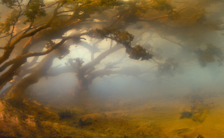 Best of 2013: Kim Keever's Water Tank Diorama Photography: 4431-dunes-05-31x47-46x71-54x84-20071.jpg