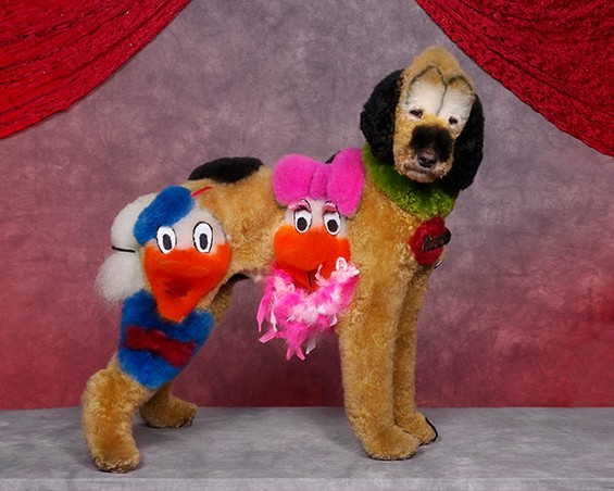 Best of 2013: When Dog Grooming Goes Too Far: Ren-Netherland-photography1.jpg