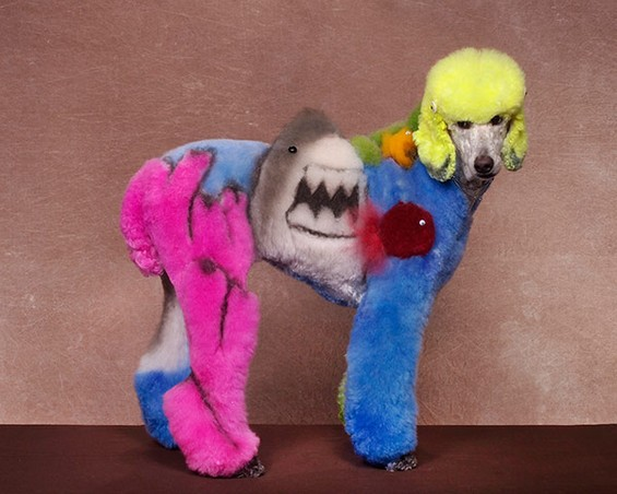 Best of 2013: When Dog Grooming Goes Too Far: Ren-Netherland-photography2.jpg