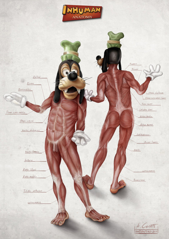 The Anatomy of Disney: goofys_anatomy_alessandro_conti.jpg