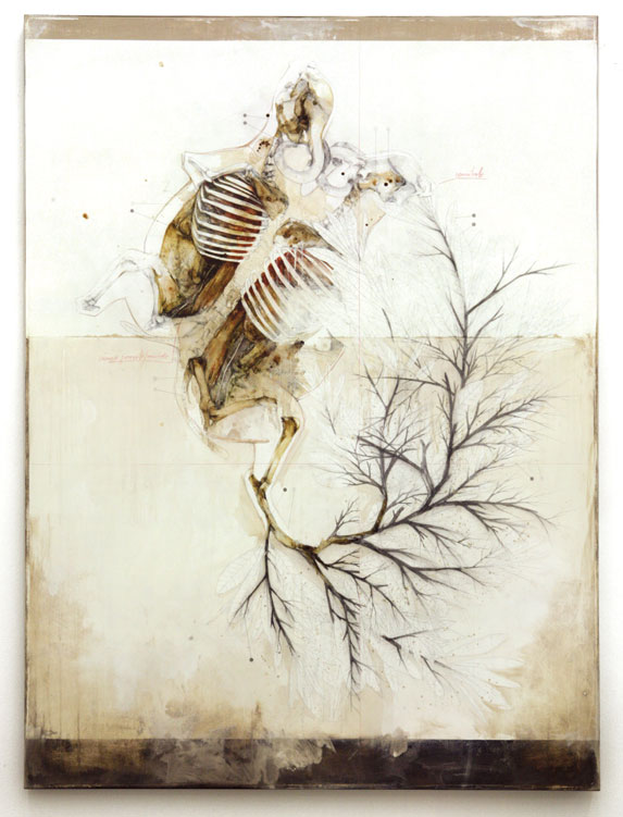 The Anatomical Work of Nunzio Paci: 1-2.jpg