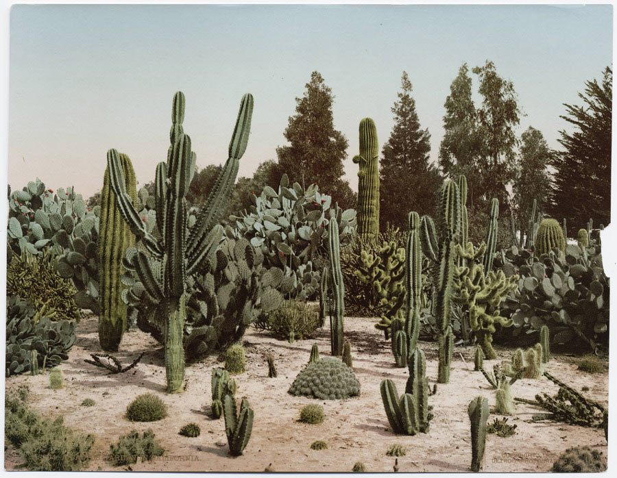 'American Tint,' a Collection of Photochromes: 09-photochrome-50watts-1033386_900.jpg
