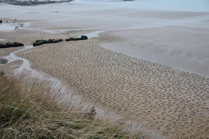 9,000 Stenciled Sand Silhouettes on Normandy Beach: tumblr_mtoze4abQG1qzd1nwo1_1280.jpg