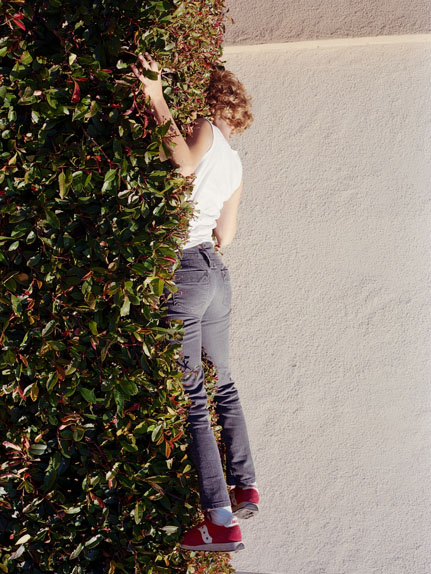 Photographs by Lee Materazzi: hedge.jpg