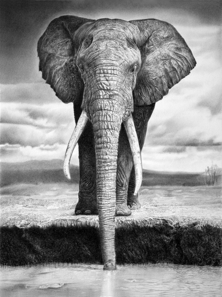 Incredible Photorealism by Franco Clun: elephant_by_francoclun-d4yf34b.jpg