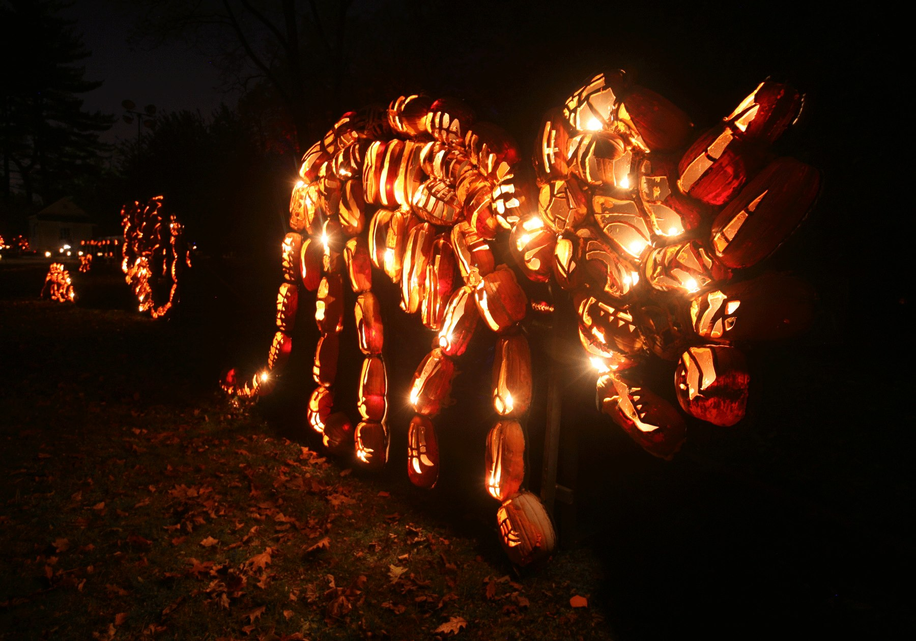 The Best of New York's Great Jack O'Lantern Blaze: 475268_10151032234990168_2135996486_o.jpg