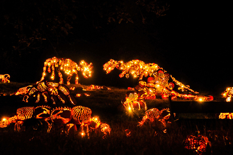 The Best of New York's Great Jack O'Lantern Blaze: blaze-3.jpg