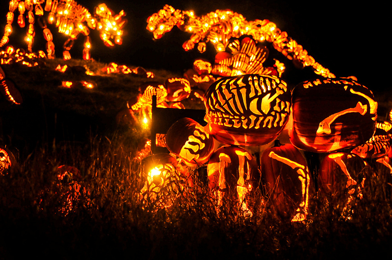 The Best of New York's Great Jack O'Lantern Blaze: blaze-4.jpg
