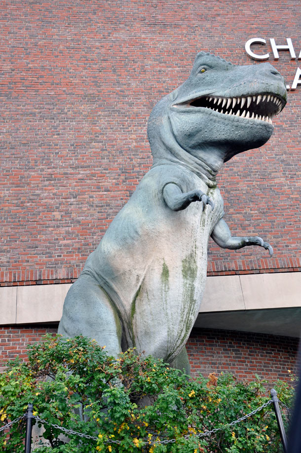 The East Coast Road Trip: Museum-of-Science-TREX.jpg