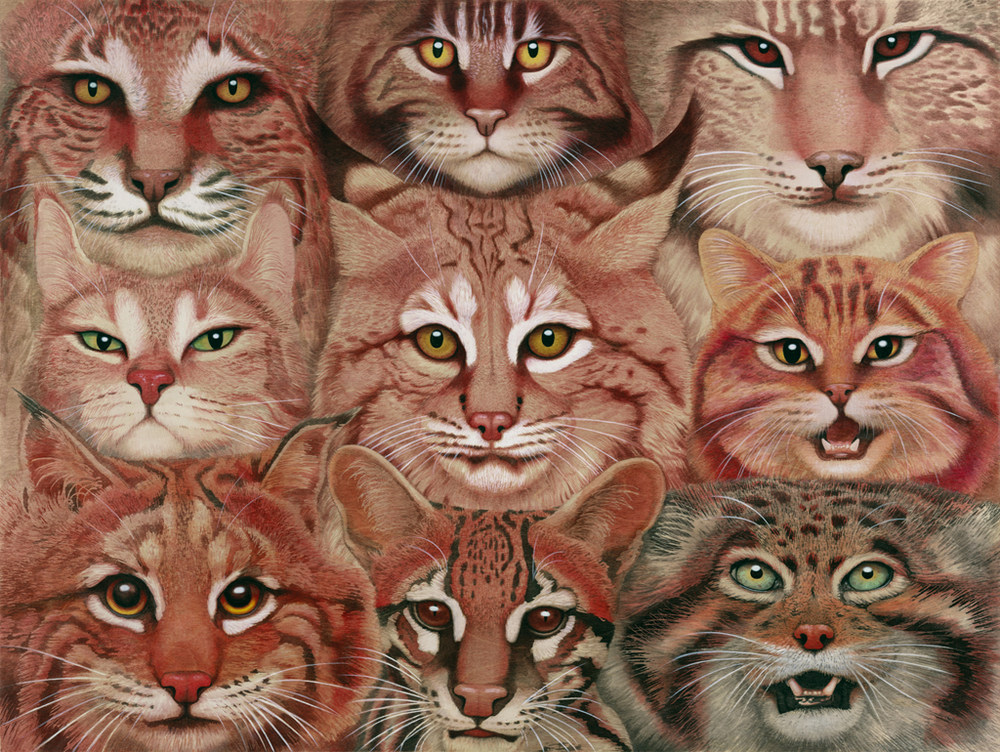 Tiffany Bozic's Intricacies of Nature: Felidae.PP.jpg