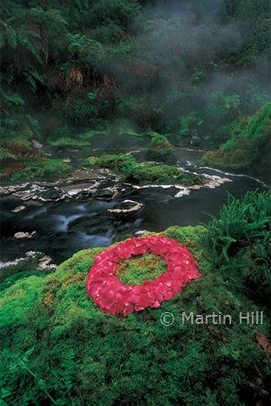 Martin Hill's Environmental Sculpture Photography: 2000_petals_p.jpg