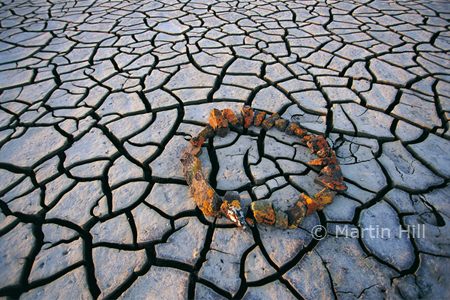 Martin Hill's Environmental Sculpture Photography: dry_season_circle_p.jpg