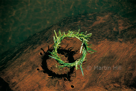 Martin Hill's Environmental Sculpture Photography: floating_frond-circle_p.jpg