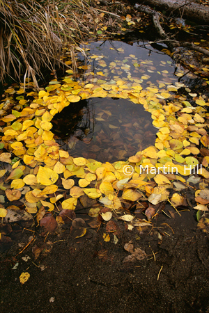 Martin Hill's Environmental Sculpture Photography: yellow_leaf_circle_p.jpg