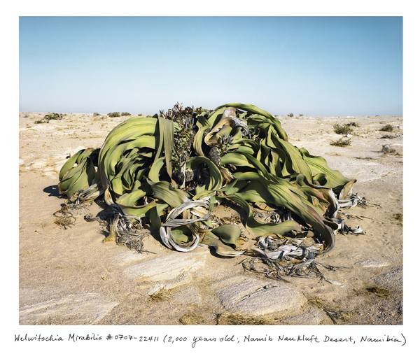 """The Oldest Living Things in the World"": juxtapoz_Rachel_Sussman6.jpg"